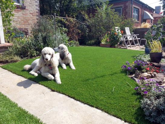 Artificial Grass Photos: Artificial Grass Carpet White Lake, Wisconsin Pet Turf, Front Yard