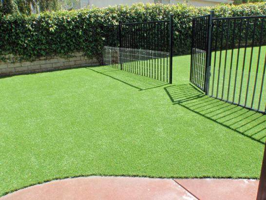 Artificial Grass Photos: Artificial Lawn Shorewood Hills, Wisconsin Pet Paradise, Landscaping Ideas For Front Yard