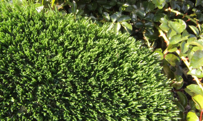 Hollow Blade-73 syntheticgrass Artificial Grass Milwaukee Wisconsin