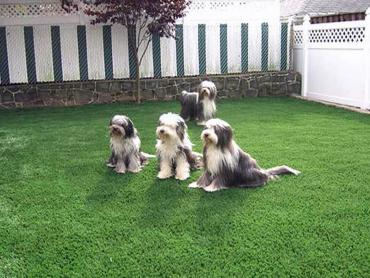 Artificial Grass Photos: Fake Grass Carpet Baileys Harbor, Wisconsin Hotel For Dogs, Grass for Dogs