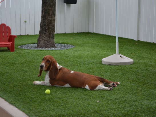 Artificial Grass Photos: Synthetic Turf Waupaca, Wisconsin Pictures Of Dogs, Dogs Park
